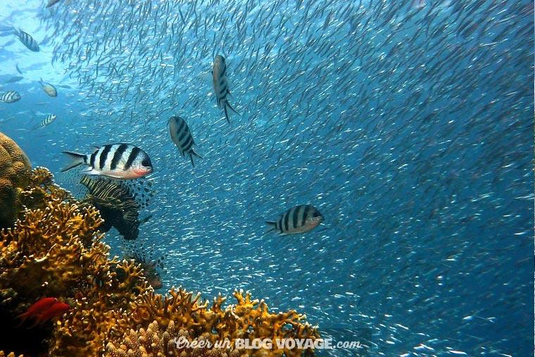 Plonger en famille à Bali vous promet de belles découvertes marines inédites.
