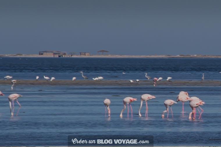 L'île des flamants roses de Djerba